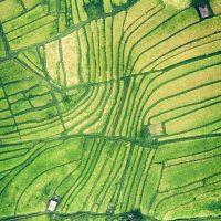 畑の航空写真